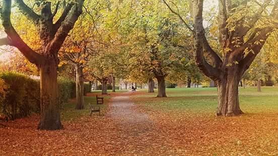 autumn park shot